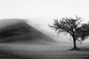 Tempête de sable à Sossusvlei, Namibie