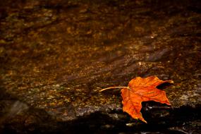 Feuille d'érable posée sur un rocher, Dixville Flume, Dixville State Park, New-Hampshire, USA