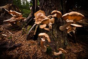 Champignons, Pretty March, Acadia National Park, Maine, USA