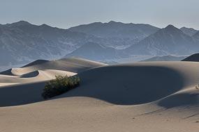Dune de sable : Mesquite Flat Sand Dunes, Vallée de la Mort, Californie, USA