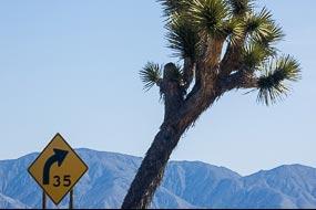 Arbre de Josué, à proximité de la Vallée de la Mort, Californie, USA
