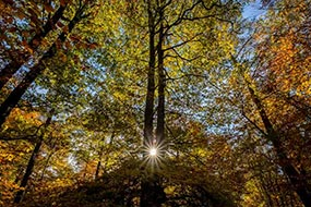 Sous-bois en automne, Forêt de Verzy, à proximité de Reims