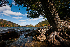Arbre au bord de la Jordan Pond, Acadia National Park, Maine, USA