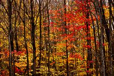 Forêt en automne, Bois Beckett, Sherbrooke, Québec