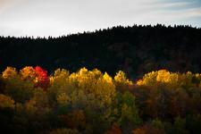 Les conifères remplacent les arbres coupés, vue aérienne, Moosehead Lake, Maine, Maine , USA