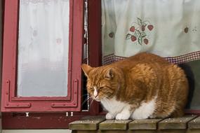 Chat sur un bord de fenêtre, Bakkagerdi