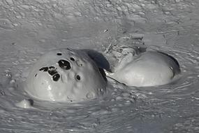 Marmite de boue volcanique,  Namafjall