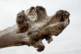 Bois flotté, Islande