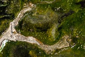 Algues vivant dans les eaux volcaniques, Hveravellir, Islande