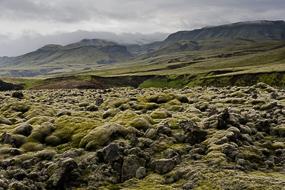 Champ de lave couvert de mousse, F208, Islande
