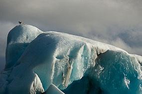 Oiseau perché sur un iceberg du Lac Jokulsarlon, Islande