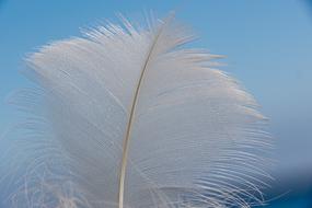 Plume d'oiseau, Islande
