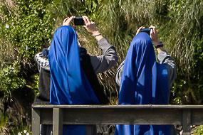 Bonne-soeurs photographiant les macareux, Borgarfjordur-Eystri, islande