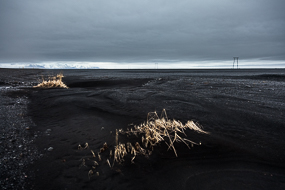 Herbe jaune poussant dans un sandur, zone désertique formée par les alluvions glaciaires, Islande
