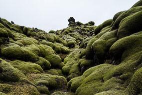 Blocs de lave recouverts de mousse, Islande