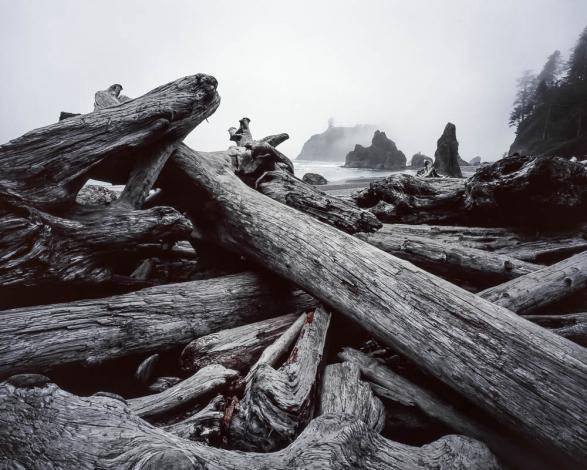 Cette photo prise dans l'Olympic National Park (USA) a été sélectionnée et exposée par le festival de Montier en Der en 2007.