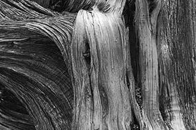 Texture de bois, Utah, USA, 2007, Noir et Blanc