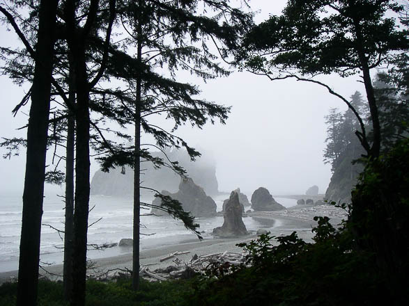 Ruby-Beach dans l'Olympic National Park, état de Washington, USA
