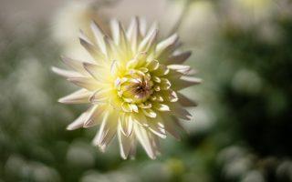 Concours 2019 de Dahlias au parc Floral du Bois de Vincennes